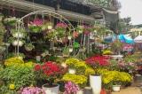 Chợ hoa Vạn Phúc