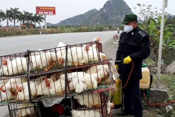 dịch cúm H5N6
