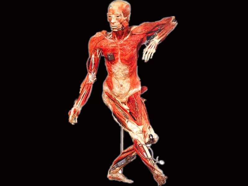 Triển lãm thân thể người nhựa hóa