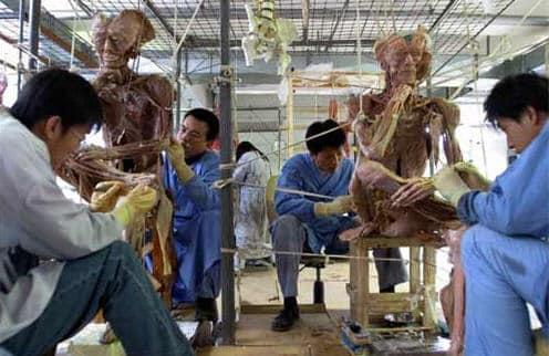 Triển lãm thân thể người nhựa hóa, triển lãm cơ thể người, triển lãm xác người