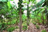 Nông nghiệp sinh thái: Vườn là rừng, và rừng cũng là vườn (video)