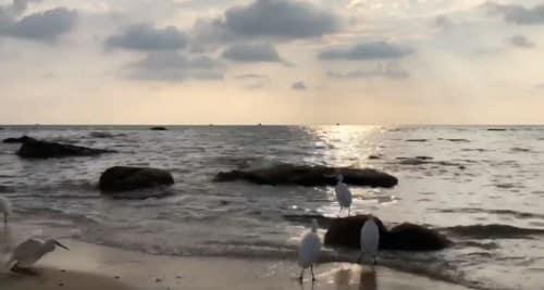 Phú Quốc - Sự ô trọc của hòn đảo