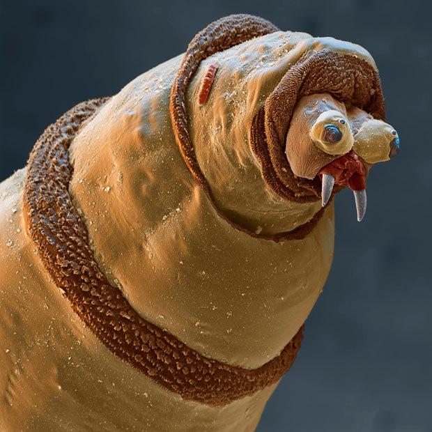 ảnh dưới kính hiển vi