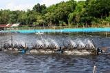 Sóc Trăng: Khởi tố vụ đầu độc ao nuôi gần 1 triệu con tôm
