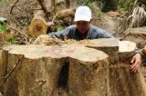 rừng phòng hộ sông Kôn