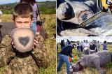 Phát hiện điều bất ngờ khi cưa sừng tê giác để.... bảo vệ chúng