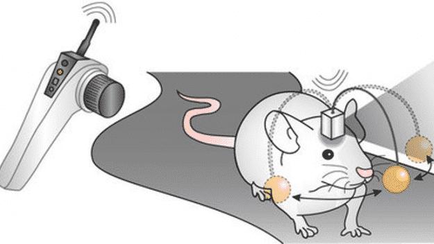 Chuột gắn điều khiển trí não