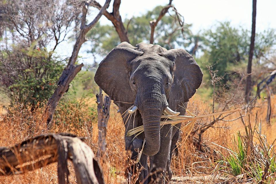 du lịch cưỡi voi