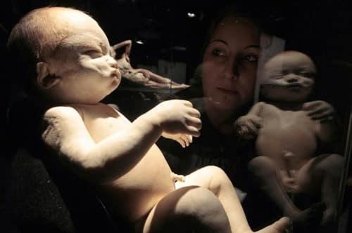 đóng cửa triển lãm thi thể người, triển lãm cơ thể người, nhựa hóa cơ thể