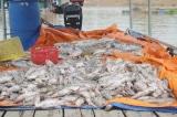 Cá tiếp tục chết trắng trên sông La Ngà