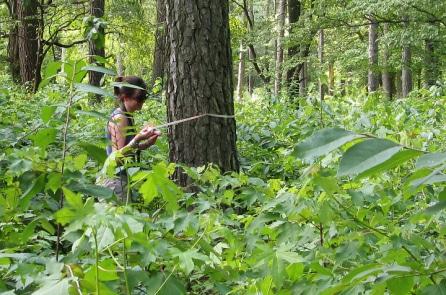 Trí tuệ của rừng: 6 điều chúng ta không biết cây cối làm được