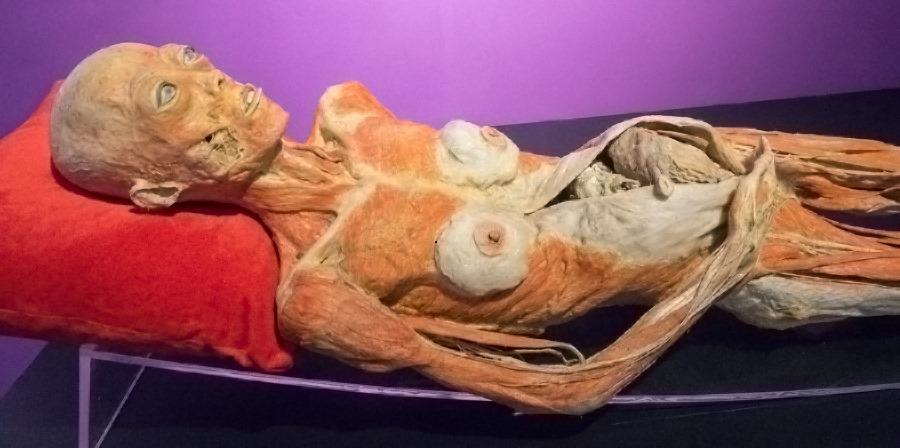 triển lãm cơ thể người tại Việt Nam