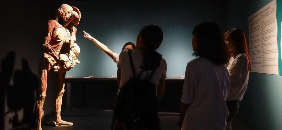 triển lãm cơ thể người tại Việt Nam, nhựa hóa cơ thể người, triển lãm xác người thật