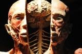 Bức màn tối đằng sau triển lãm cơ thể người tại Việt Nam