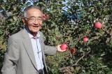 Người nông dân mất 11 năm để trồng được một kỳ tích làm chấn động Nhật Bản