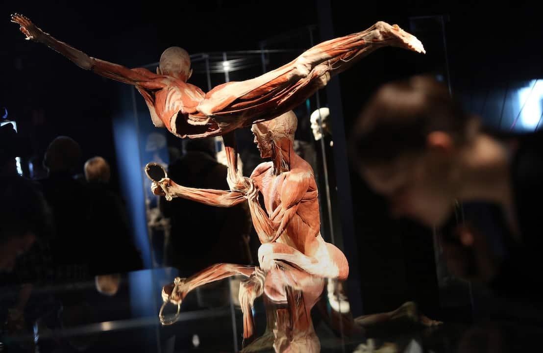 triễn lãm cơ thể người, triễn lãm cơ thể người thật, người nhựa hóa, triển lãm xác người
