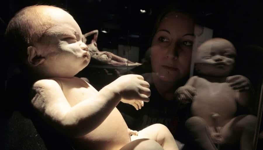 triển lãm cơ thể người tại Việt Nam, nhựa hóa cơ thể, triển lãm xác người