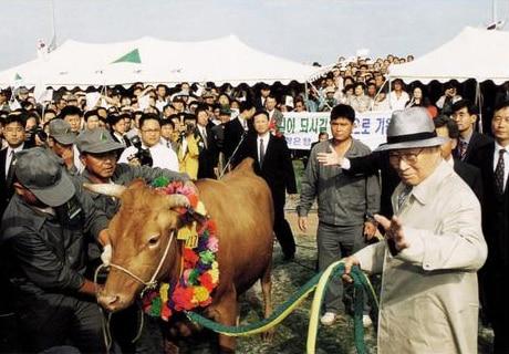 Chung Ju-yung: Hành trình từ một con bò tới đế chế Hyundai