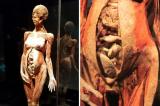 Nguồn gốc thi thể nhựa hóa: Tam giác giết người