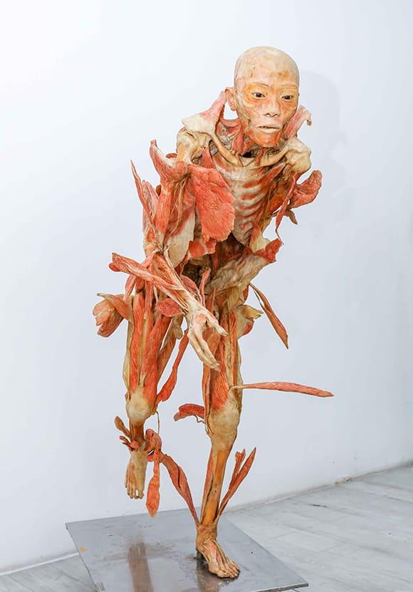 trien lam co the nguoi, Triển lãm Sự bí ẩn đặc biệt của cơ thể người, nhựa hóa cơ thể người