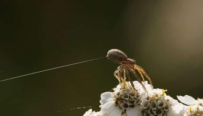 Lợi dụng điện trường, nhện có thể bay