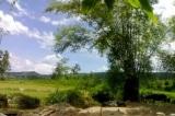 Ký ức nghề trồng mía làm đường ở làng Bàn Lãnh xưa