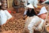 Nông sản Trung Quốc đội lốt Đà Lạt