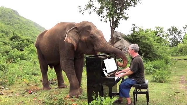 Cảm động nghệ sĩ piano chơi nhạc cổ điển để xin lỗi những chú voi mù