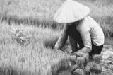 Năm nhuận – Trích Chuyện làng thời Hợp tác xã