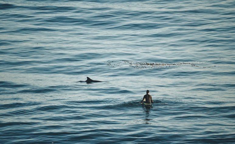 Người đàn ông đấm cá mập và vẫn sống sót