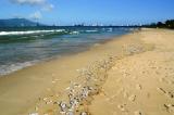Đà Nẵng: Cá chết trắng bờ, bốc mùi hôi thối