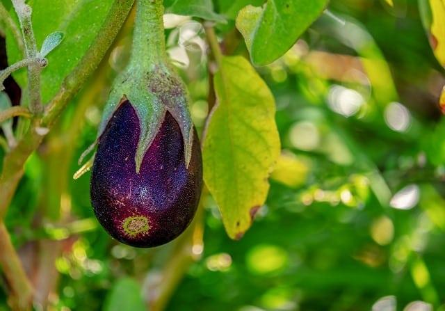 loại trái cây mà ai cũng tưởng lầm là rau củ