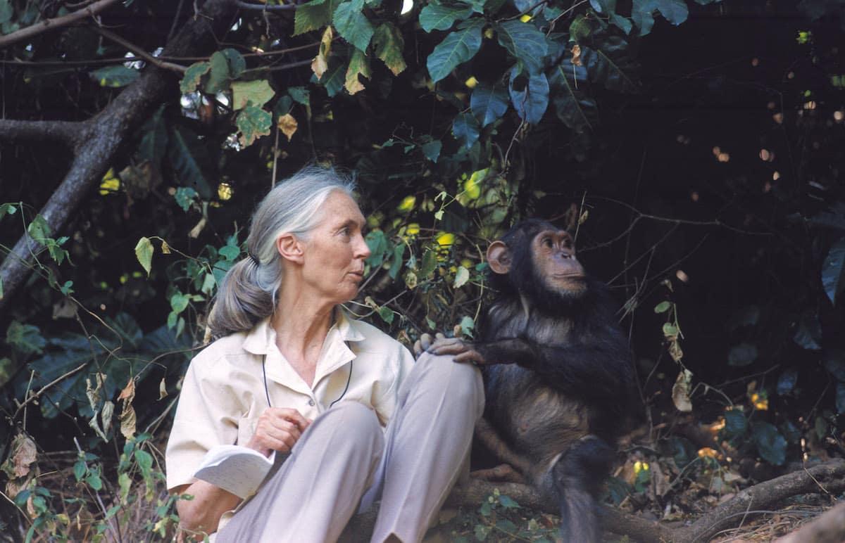 Jane Goodall: Sinh vật thông minh nhất Trái Đất đang phá hủy ngôi nhà của mình