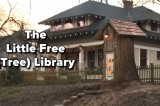 Biến gốc cây khô trăm tuổi thành thư viện miễn phí