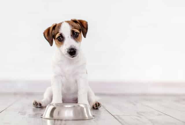 Bất ngờ với những món ăn của người mà cún cưng cũng có thể ăn được