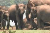 300 con voi thương tiếc không nỡ rời xa đồng loại