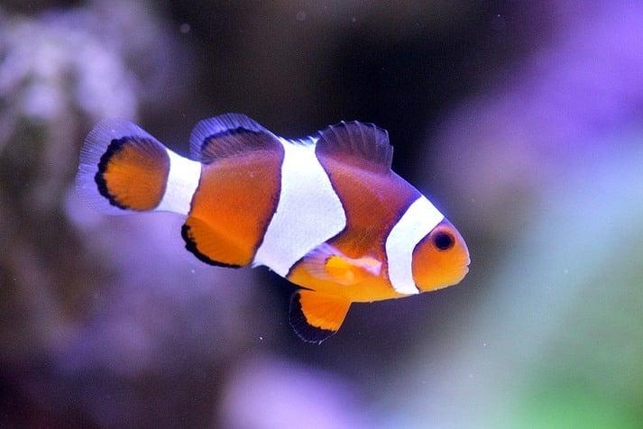 """6 loài động vật có thể """"tự"""" hoặc """"bị"""" thay đổi giới tính"""