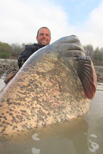 cá nheo khổng lồ
