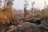 Gia Lai: Để mất rừng, 2 tập thể và 18 cá nhân bị kỷ luật