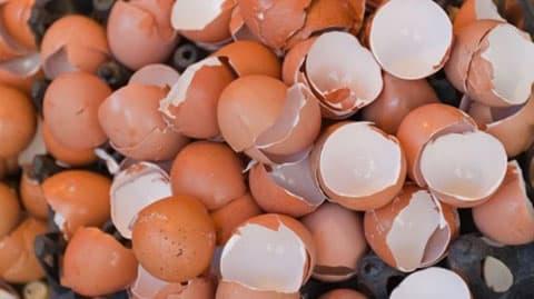 Kết quả hình ảnh cho vỏ trứng
