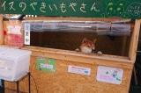 """Chú chó """"bán"""" khoai lang nướng nổi tiếng ở Nhật"""