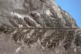 Tìm thấy khu rừng hóa thạch 280 triệu năm tuổi ở… Nam Cực