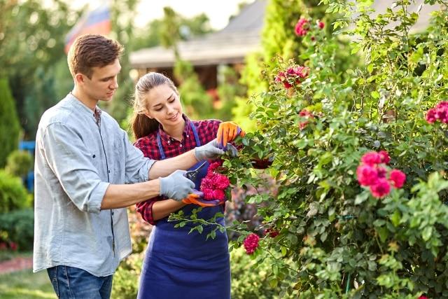 Hãy rời xa smartphone vào cuối tuần, làm vườn mang lại rất nhiều lợi ích