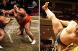 Vì sao sumo Nhật Bản ít mắc các căn bệnh liên quan đến béo phì?
