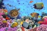 """WC """"thủy cung"""" ở Nhật: Vừa đi vệ sinh, vừa ngắm cá"""