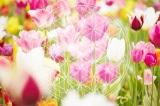 Bông hoa Sự sống, Hình học Linh thiêng và những bí ẩn cổ đại