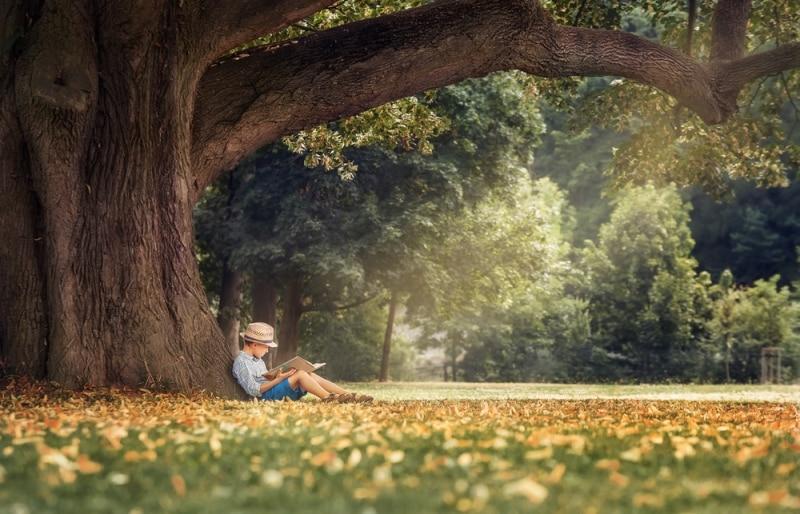 Cậu bé dưới bóng cây