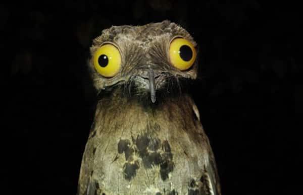 loài chim xấu xí nhất thế giới