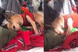 Chú chó vẫn nhớ mùi của người chủ đã qua đời 6 năm trước