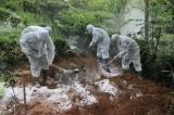 Tiêu hủy ổ dịch tả lợn châu Phi với 20.000 con